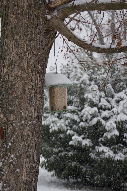 Inverno - Cibo per gli uccellini - Lily&Sage Design