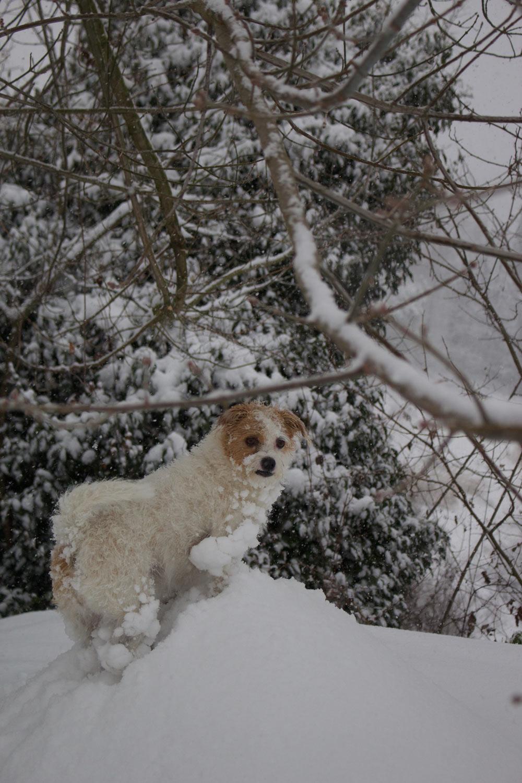 Inverno - Mopsy nella neve - Lily&Sage Design