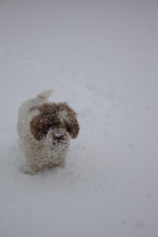 Inverno - Otto nella neve - Lily&Sage Design