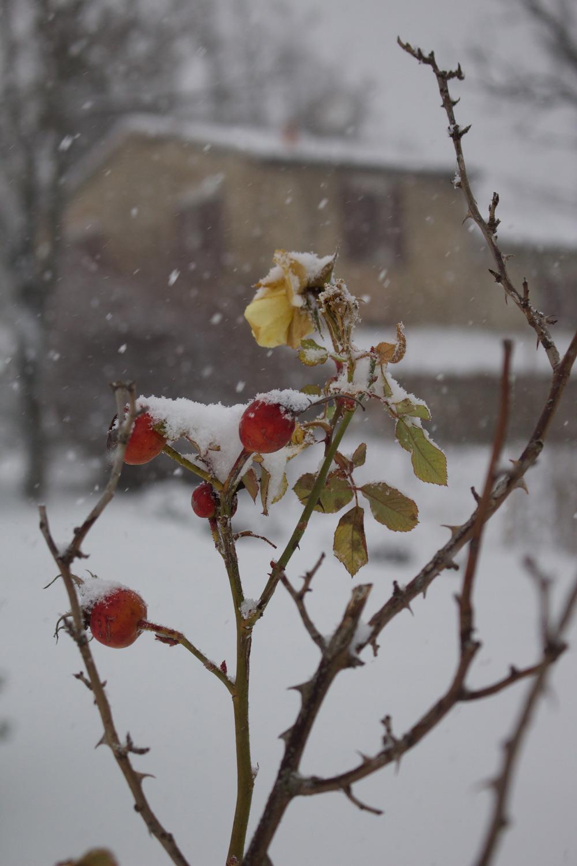Inverno - Le rose in giardino - Lily&Sage Design