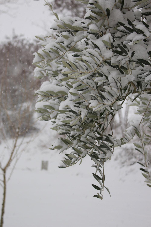 Inverno - Ulivo - Lily&Sage Design