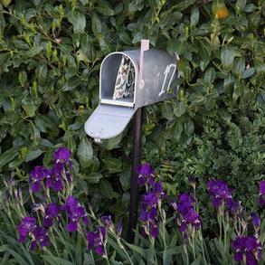 Snail mail - Lily&Sage Design - Instagram