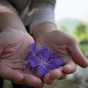 Pervinca - Lily&Sage Design - Instagram
