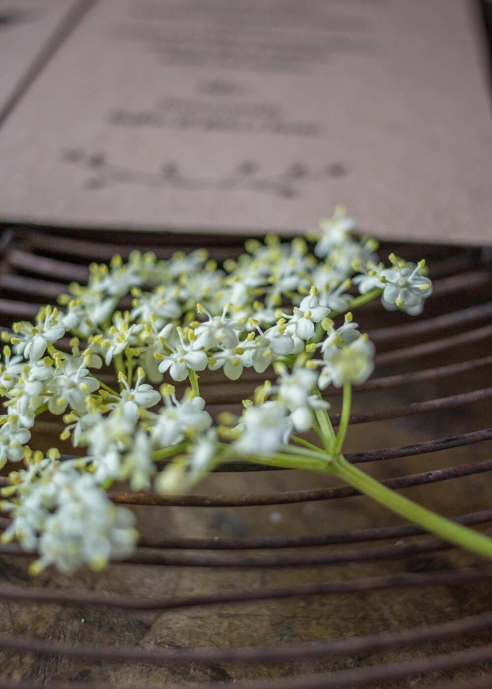 Wedding suite Campagna inglese - Dettagli rustici e delicati - Lily&Sage Design