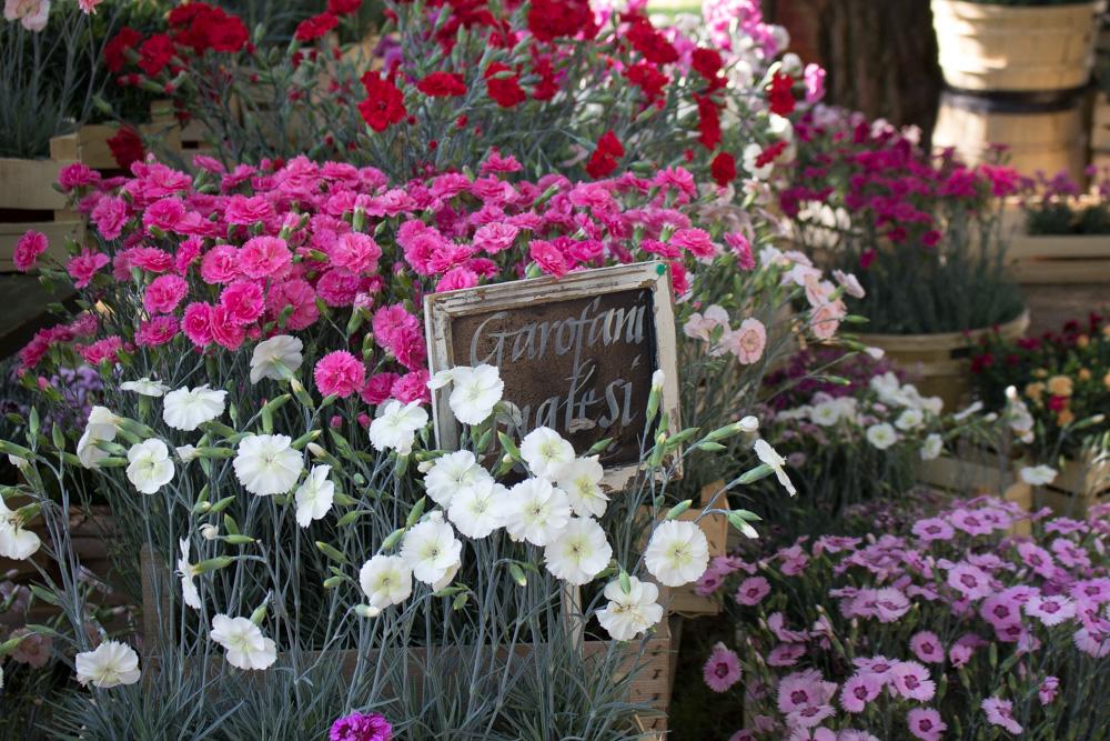 I garofani inglesi di Billo a Floravilla 2017 - Lily&Sage Design
