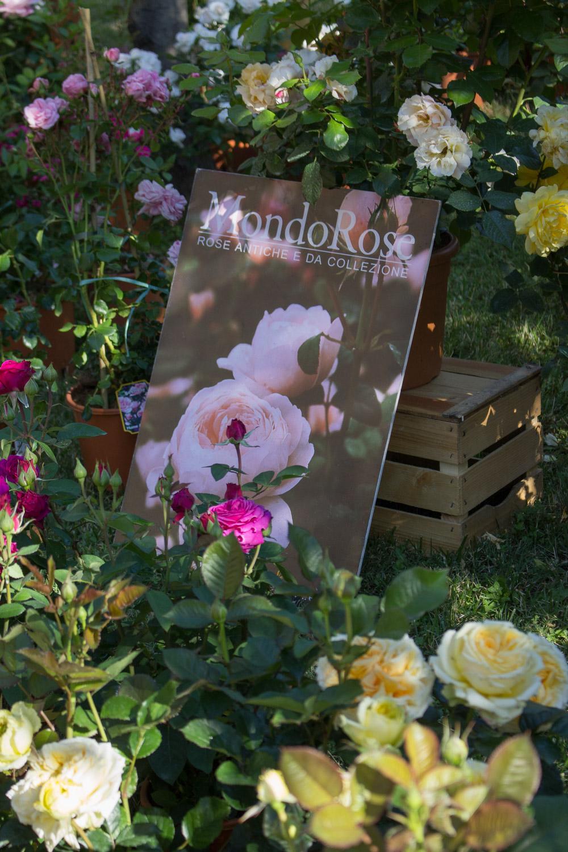 Rose antiche di Mondo Rose a Floravilla 2017 - Lily&Sage Design