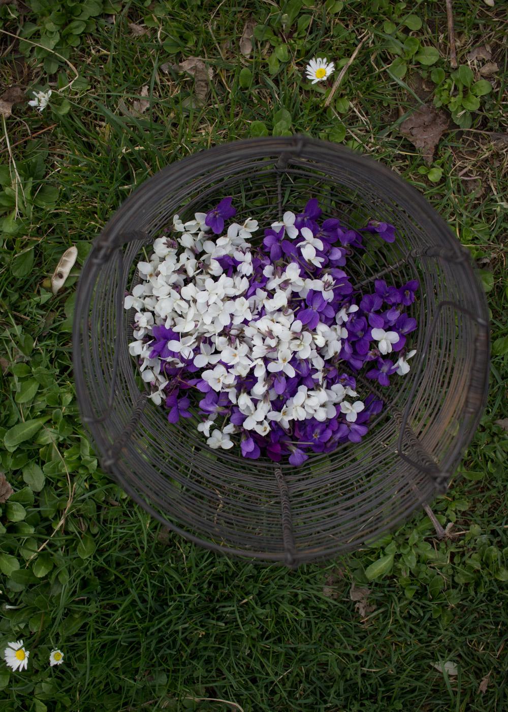 Le violette del mio giardino - Lily&Sage Design