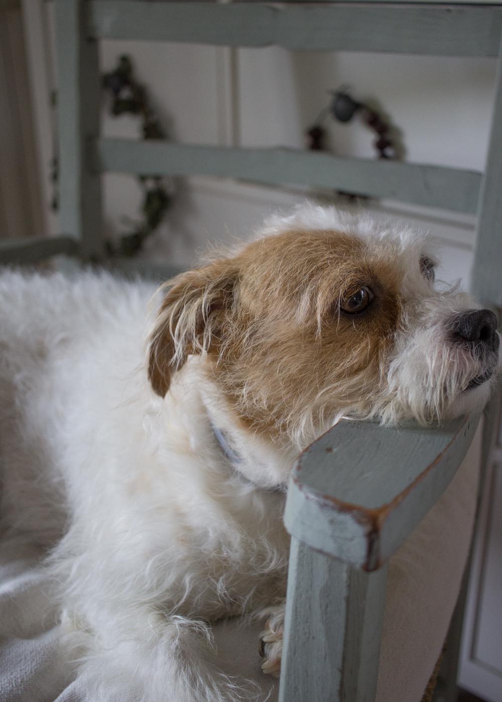 La mia cagnolina Mopsy - Lily&Sage Design