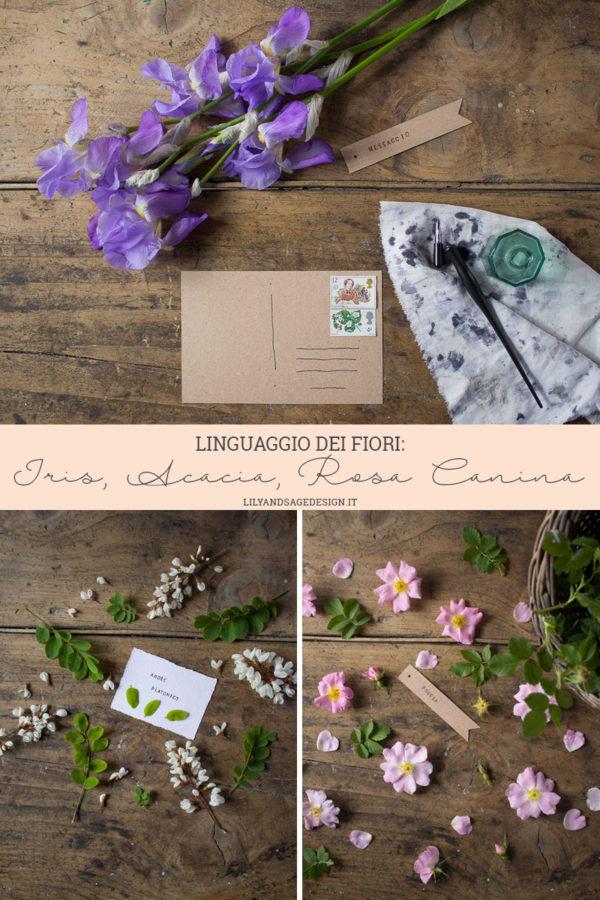 Linguaggio dei Fiori: Iris, Acacia, Rosa Canina - Lily&Sage Design