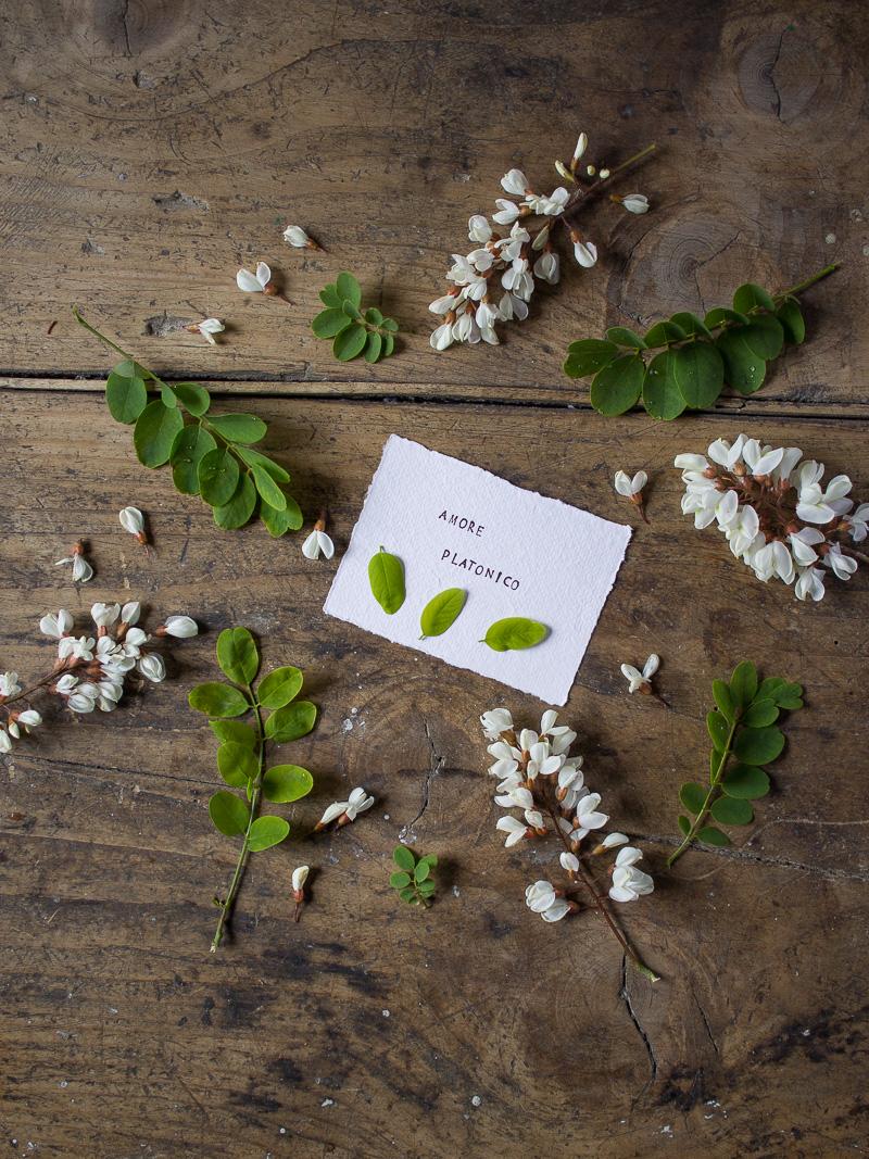 Linguaggio dei Fiori: Acacia o Rubinia, Amore Platonico - Lily&Sage Design