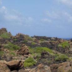 La bellezza dell'estate – Vacanze a Pantelleria – Passeggiate nella macchia mediterranea – Lily&Sage Design