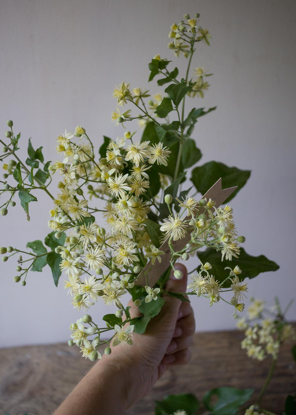 La bellezza dell'estate - I fiori della vitalba - Lily&Sage Design