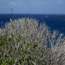 La bellezza dell'estate – Vacanze a Pantelleria – Lily&Sage Design