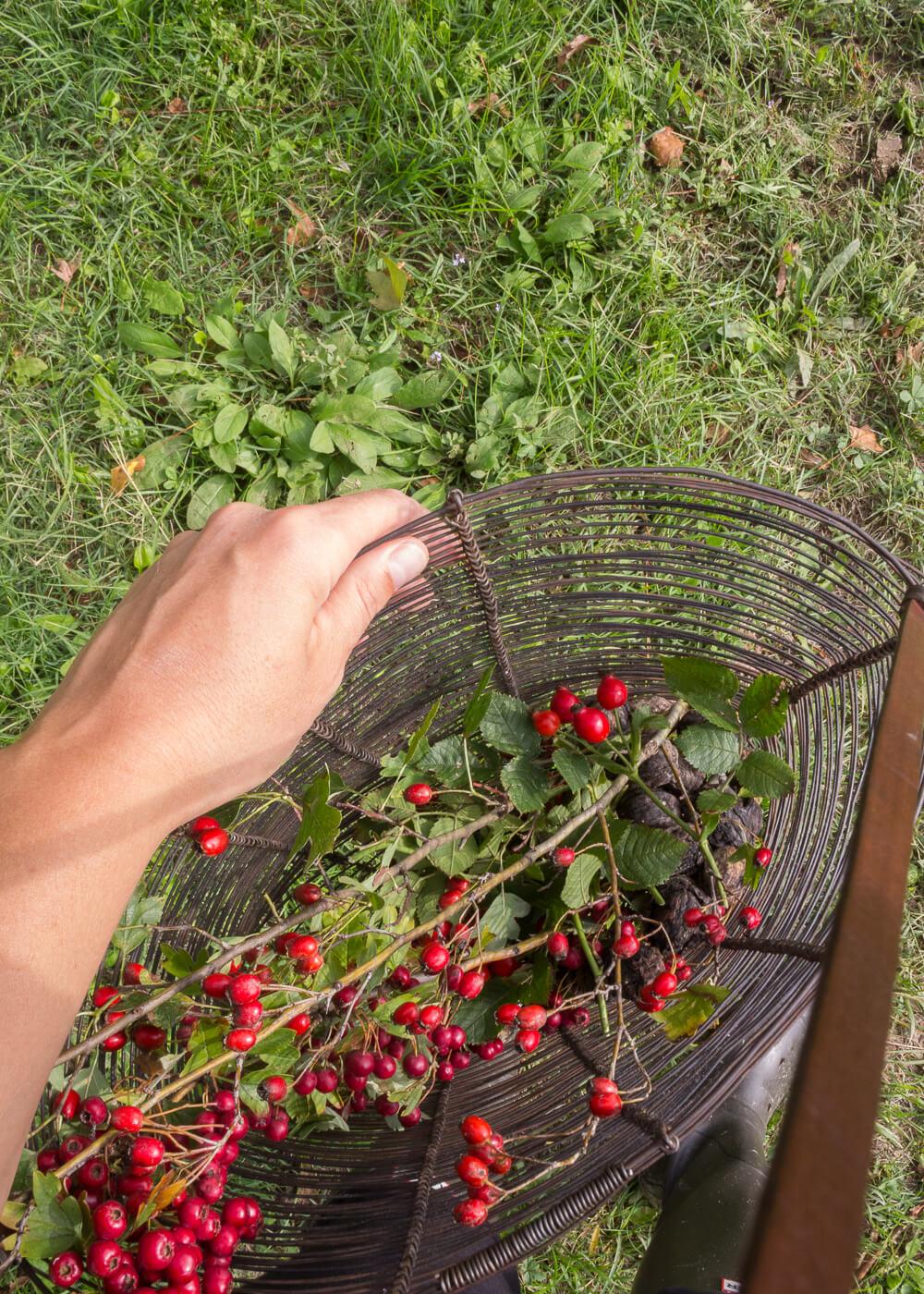 La bellezza dell'autunno - Raccogliere le bacche - Lily&Sage Design