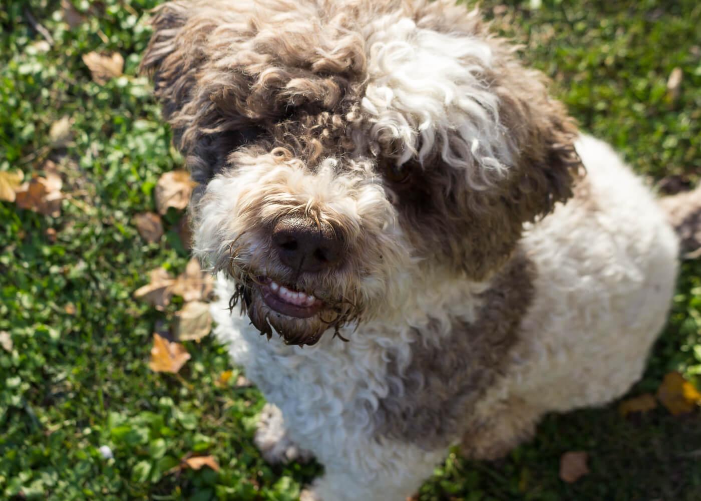 La bellezza dell'autunno - Passeggiate con il mio cane Otto - Lily&Sage Design