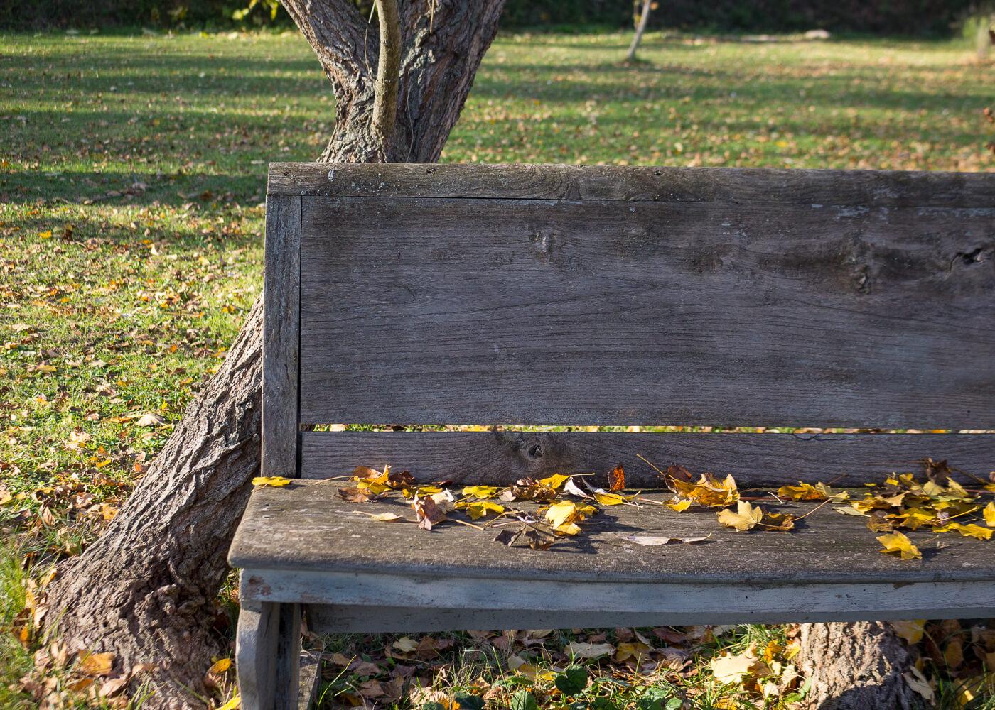 La bellezza dell'autunno - Momenti calmi in giardino - Lily&Sage Design